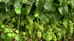 Wine Country 07 - HD Stock Footage