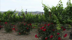 Wine Country 13 - HD Stock Footage