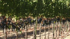 Wine Country 17 - HD - stock footage