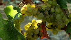 Wine Country 30 - HD - stock footage