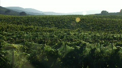 Wine Country 34 - HD - stock footage