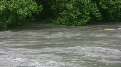Fast rising river with trees - after flash flood Stock Footage