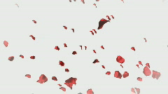Valetines day video Background Stock Footage