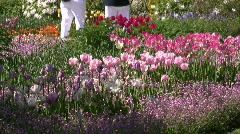 Botanic Garden Tulips flower blossom in Spring Stock Footage
