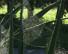 backlit cobweb - stock footage