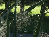 Stock Video Footage of backlit cobweb