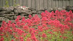Summer flowers  Stock Footage