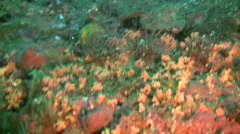 Air bubbles coming up from the ocean floor Stock Footage