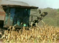 Combine Harvesting Corn 02 SD Footage