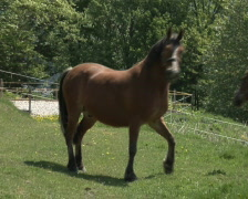 Two horses Stock Footage