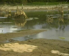 Pan from dry waterhole to animal bones  - stock footage