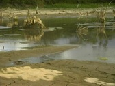Pan from dry waterhole to animal bones  Stock Footage