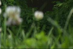 Flor-1 Stock Footage