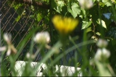 Flor-2 Stock Footage