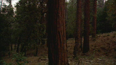 Stock Video Footage of ForestFirePanFromUntouchedTrees