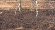 Germany Chiemgau Dry winter bushes in Moorland Stock Footage