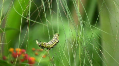 Active motion Caterpillar Raupe feeding Stock Footage