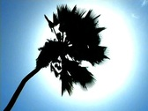 Palm Tree Sun Flare 3 Stock Footage