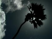 Palm Tree Silhouette 1 Stock Footage