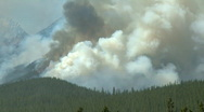 Stock Video Footage of Forest Fire 1