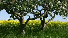 Rape field Alternative Clean Green energy - stock footage
