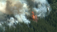 Forest Fire 4 Stock Footage