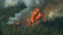 Stock Video Footage of Forest Fire 5