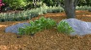 Garden landscape Stock Footage