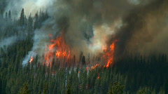 Stock Video Footage of Forest Fire 6