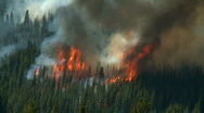 Forest Fire 6 Stock Footage