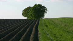 Asparagus field in Bavaria Germany Stock Footage