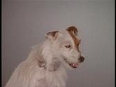 Dog1 Stock Footage