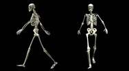 Stock Video Footage of db skeleton 02 1280x720