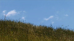grass-sky - stock footage