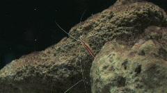 Underwater creature Stock Footage