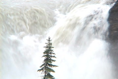 Athabasca Falls CU Tilt spring Stock Footage
