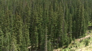 Rocky Mountain Pine Trees Stock Footage