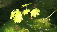 Leafs and water Stock Footage