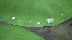 Waterdrop pisaran lootuksenlehti Arkistovideo