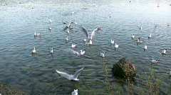 Seagull flying over Lake Ammer, Herrsching, Bavaria, Germany - stock footage