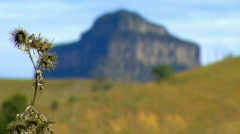 Volcanic Plug - Mount Barney with Dead Thistle in foreground Stock Footage