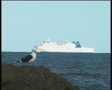 Bird rock ship Stock Footage
