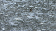 Mr. Strong Ant Stock Footage
