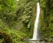 Pan from cloudforest waterfall to stream Stock Footage
