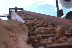 Low Angle of Potatoes on Farming Equipment Agriculture - stock footage