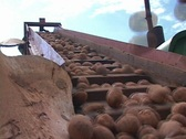 Stock Video Footage of Low Angle of Potatoes on Farming Equipment Agriculture
