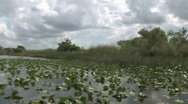 Stock Video Footage of Everglades filmed from an air boat