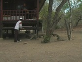 Stock Video Footage of Man pushes Komodo dragons