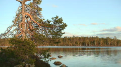 Pine tree in Finnish Lapland at sunset Stock Footage