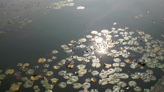 Lily Pond in Autumn Stock Footage
